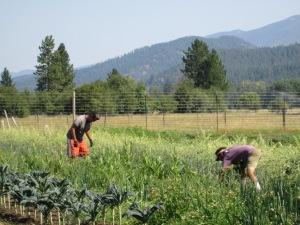 Joseph and Karl harvesting